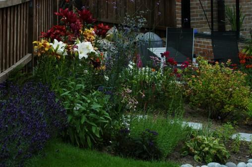 Liljene er samlet opp mot gjerdet slik at de er litt beskyttet for vind.