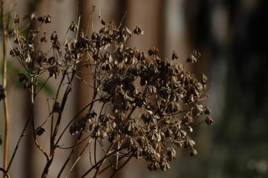 Vakker i høstsol