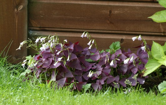 Her er den ute i bed i hagen.