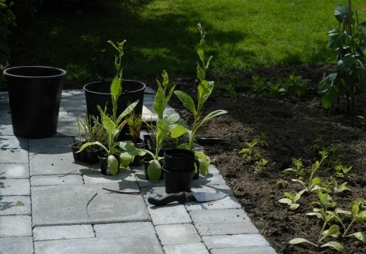 Noen mindre planter er allerede på plass, og her skal de siste i jorden.