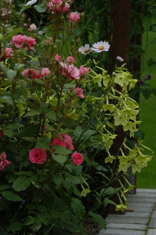 Den limegrønne er en fin kombinasjon med rosa roser.