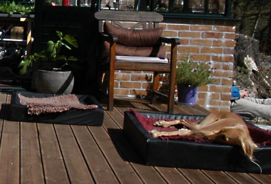 Vi får klar beskjed om å legge ut hundesengene på terrassen dersom vi ikke er kjappe nok. Halima elsker å ligge her i solen.