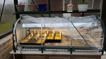 Det er god plass i kuvøsen, og en trenger ikke så mange rundene før en er i mål med antallet planter.